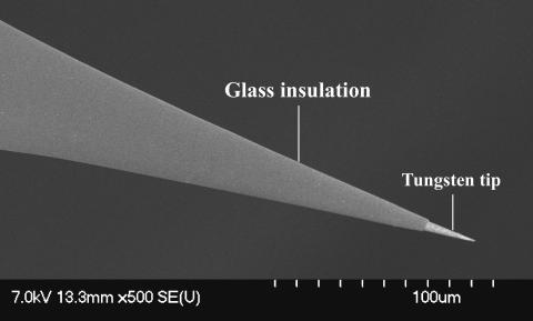 SEM image of the tip