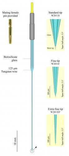 Tungsten-in-glass  microelectrode
